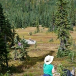 washington-pass-meadow-11