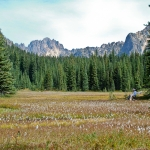 washington-pass-meadow