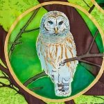 Oak-Forest Barred Owl