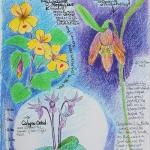 Kristen Gilje wild-flowers-may19