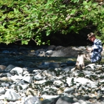 Wild journal 2012 Canyon Creek 12